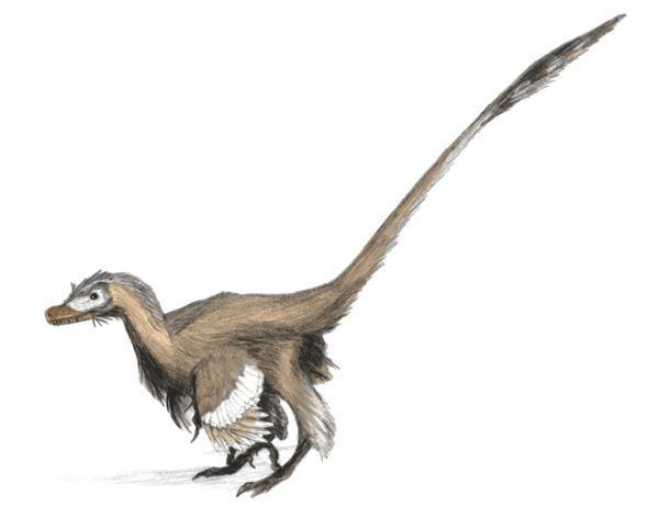Coelurosauria Palaeos Vertebrates Coelurosauria Dromaeosauridae