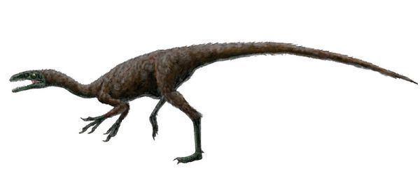 Coelurosauria Palaeos Vertebrates Coelurosauria Coelurosauria