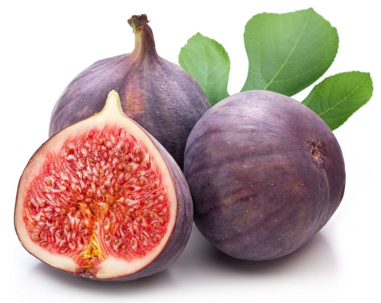 Common fig Online Buy Wholesale common fig from China common fig Wholesalers