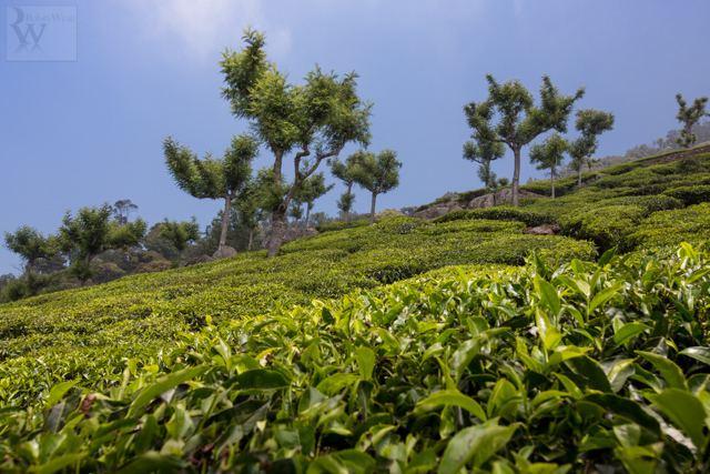 Coonoor Beautiful Landscapes of Coonoor