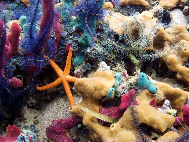 Coral Corals Coral Pictures Coral Facts National Geographic