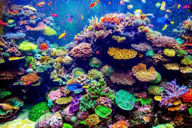 Coral Genetics might be able to save the world39s coral reefs Genetic