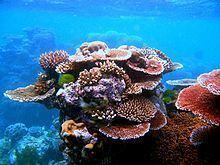 Coral httpsuploadwikimediaorgwikipediacommonsthu