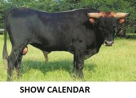 Corriente cattle North American Corriente Association Corriente Cattle Breed