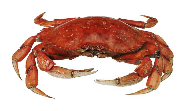 Crab Crab Recipes Crab Food Recipes