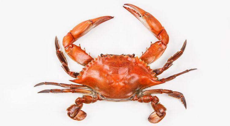 Crab httpscdn0voxcdncomthumborx4uBPZ7BTfUn6lSD