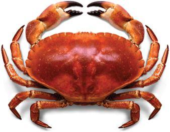 Crab Crab Dream Meaning and Interpretations Dream Stop