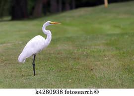 Crane (bird) Crane bird Stock Photo Images 8715 crane bird royalty free