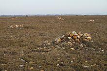 Crau httpsuploadwikimediaorgwikipediacommonsthu