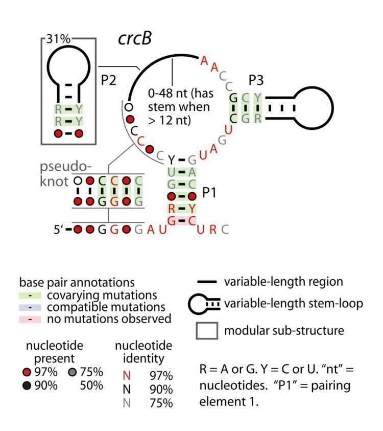 CrcB RNA motif