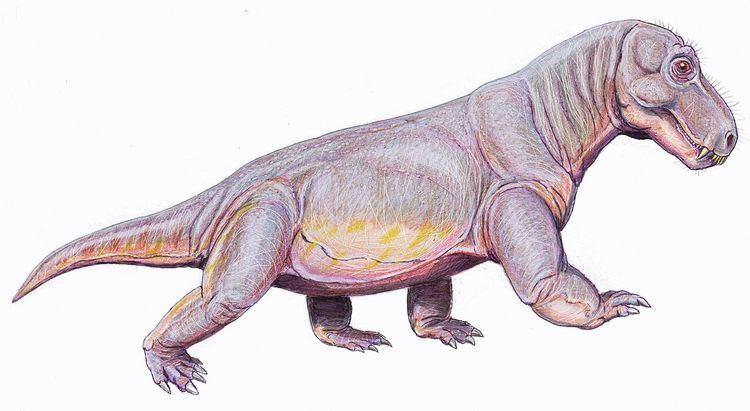 Criocephalosaurus
