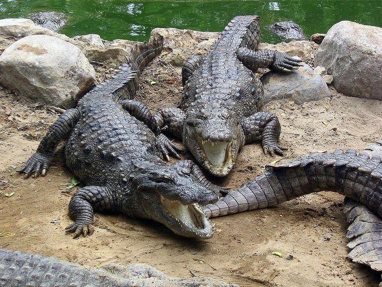 Crocodile Breeding Centre, Kurukshetra