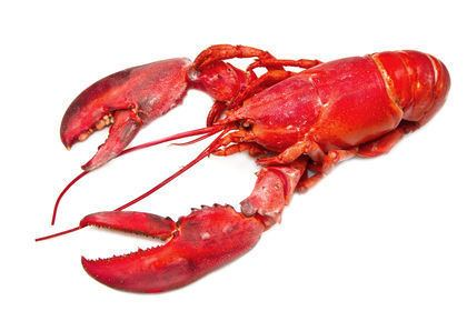 Crustacean Crustaceans body used water process life plants type chemical