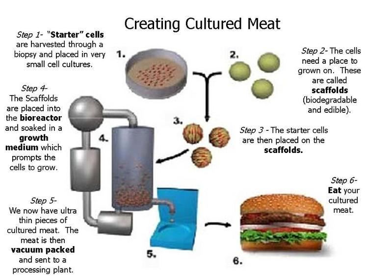 Cultured meat The Cultured Meat Blog