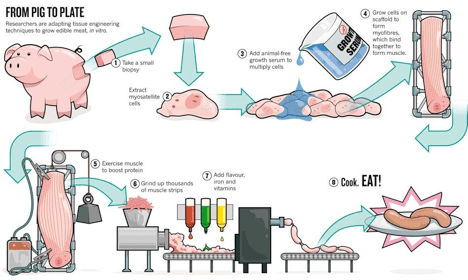 Cultured meat Food of the future in vitro meat Science in the News