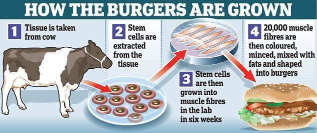 Cultured meat Labgrown burgers from bovine stem cells will be on the menu by 2020