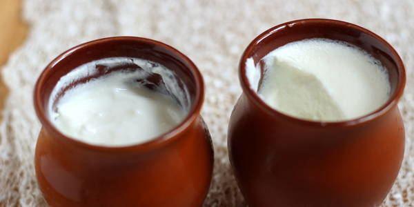 Curd How To Make Homemade Yogurt Curd Steps to Make Dahi at Home