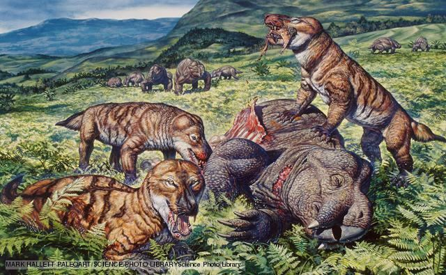 Cynodont BBC Nature Cynodonts videos news and facts
