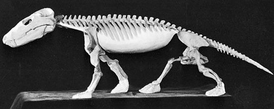 Cynognathus Cynognathus fossil genus Britannicacom
