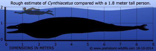 Cynthiacetus Cynthiacetus