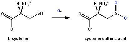 Cysteine dioxygenase