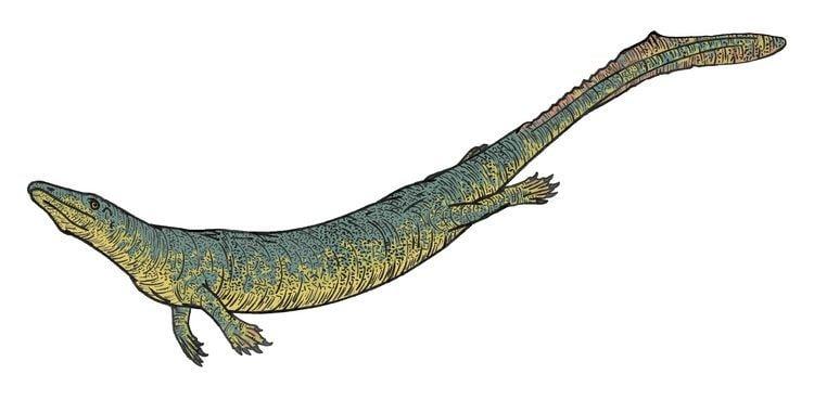 Dallasaurus Dallasaurus Wikiwand