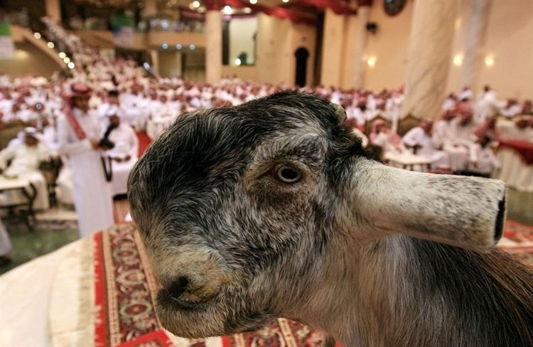 Damascus goat The Damascus Goat Looks Really Strange Lazer Horse