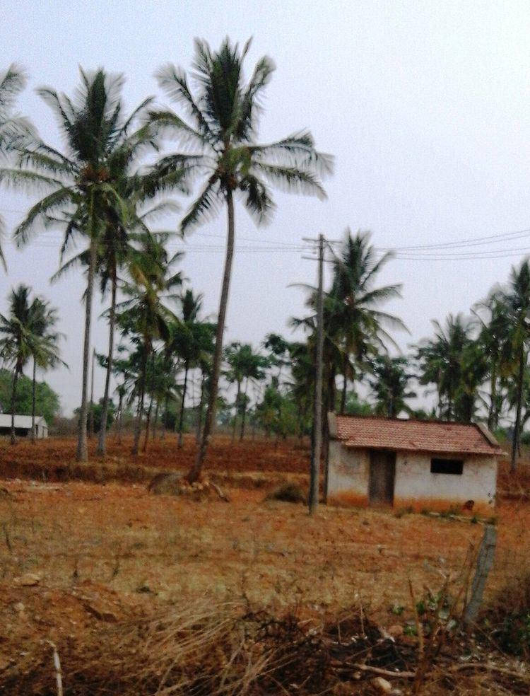 Daripura, Mysore