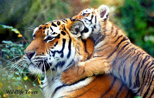 Darrah National Park Darrah National Park Amplifies Fame to India Tourism India