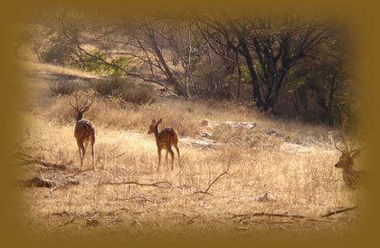 Darrah National Park Darrah National Park Darrah Sanctuary Tours Darrah Darrah