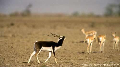 Darrah National Park Darrah National Park India Getaways