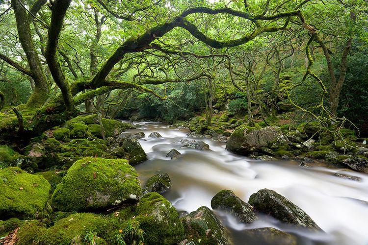 Dartmoor Forest wwwwydemeetdartmoorcomuploads32713271616