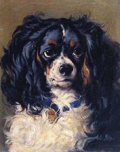 Dash (spaniel) httpssmediacacheak0pinimgcomoriginals96