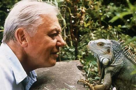 David Attenborough davidattenborough Biography of Sir David Frederick Attenborough