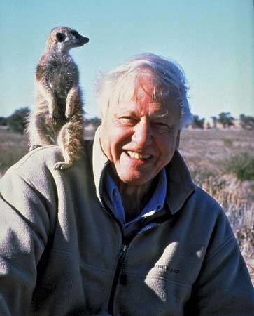 David Attenborough Sir David Attenborough English broadcaster and author Britannicacom