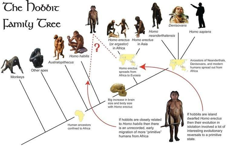 Denisovan Punnett39s Square The Denisovans Ancient Humans Discovered
