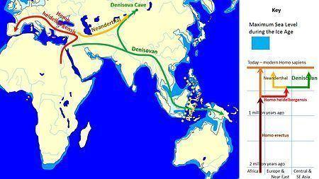 Denisovan httpsuploadwikimediaorgwikipediacommonsthu