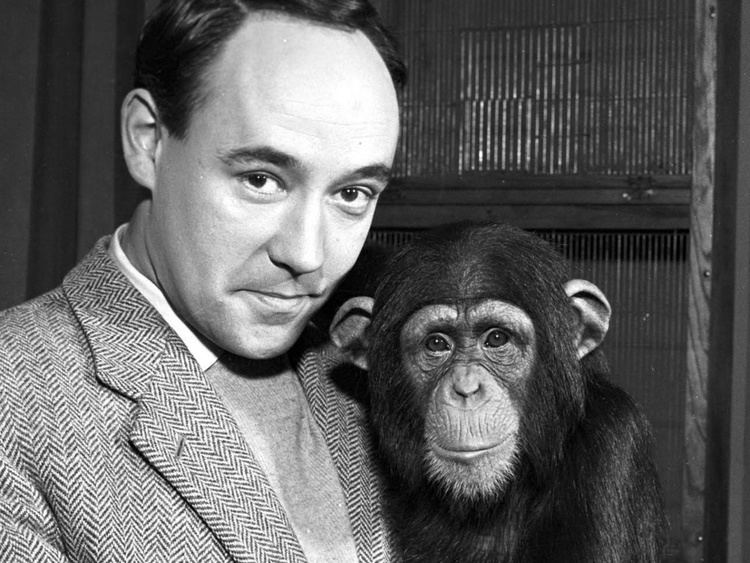 Desmond Morris Why chimps are no chumps From the archive 29 August 1961