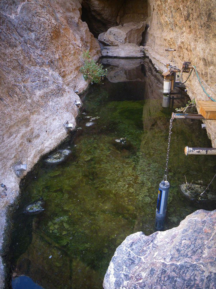 Devils Hole pupfish First Successful Breeding of Devils Hole Pupfish