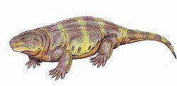 Diasparactus httpsuploadwikimediaorgwikipediacommonsthu