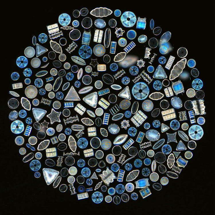 Diatom Nano Silica amp Diatoms Nualgi Aquarium