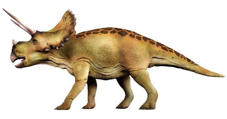 Dinosaur Dinosaur Facts Types of Dinosaurs DK Find Out