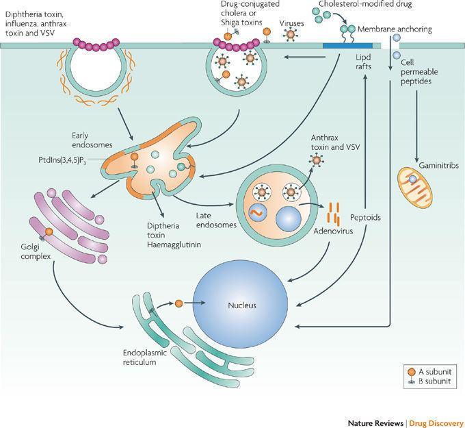 Diphtheria toxin Diphtheria7