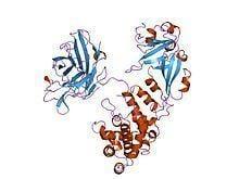 Diphtheria toxin httpsuploadwikimediaorgwikipediacommonsthu