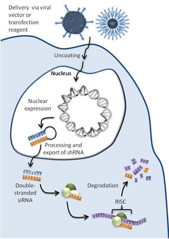 DNA-directed RNA interference