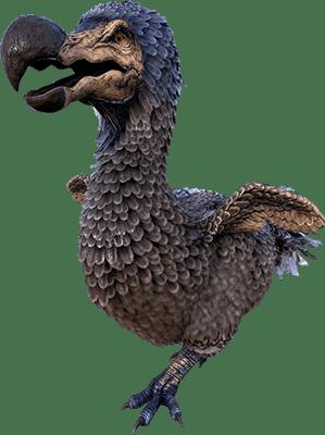 Dodo Dodo Taming Calculator Dododex Ark Survival Evolved