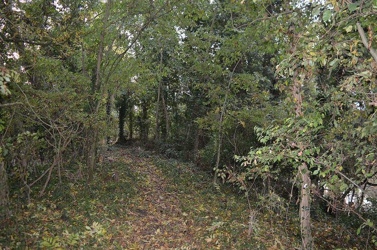 Doghouse Grove