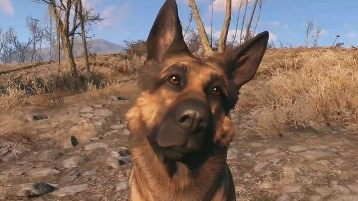 Dogmeat Help I39ve lost Dogmeat How to find Fallout 4 companions Thumbsticks