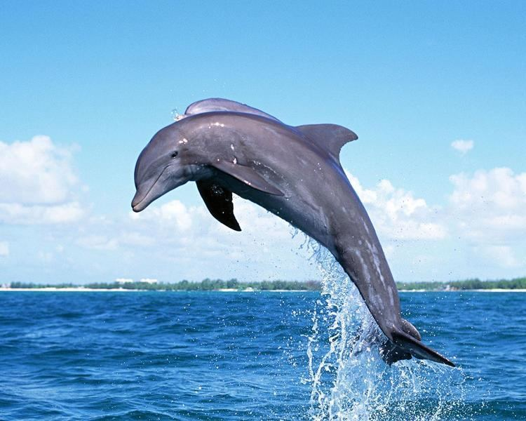 Dolphin Dolphin Pictures Images Photos