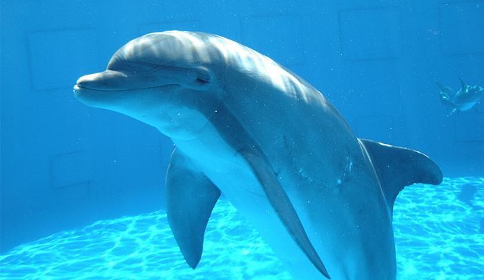 Dolphin Dolphin The Smartest Animal on This Earth NewsReadin